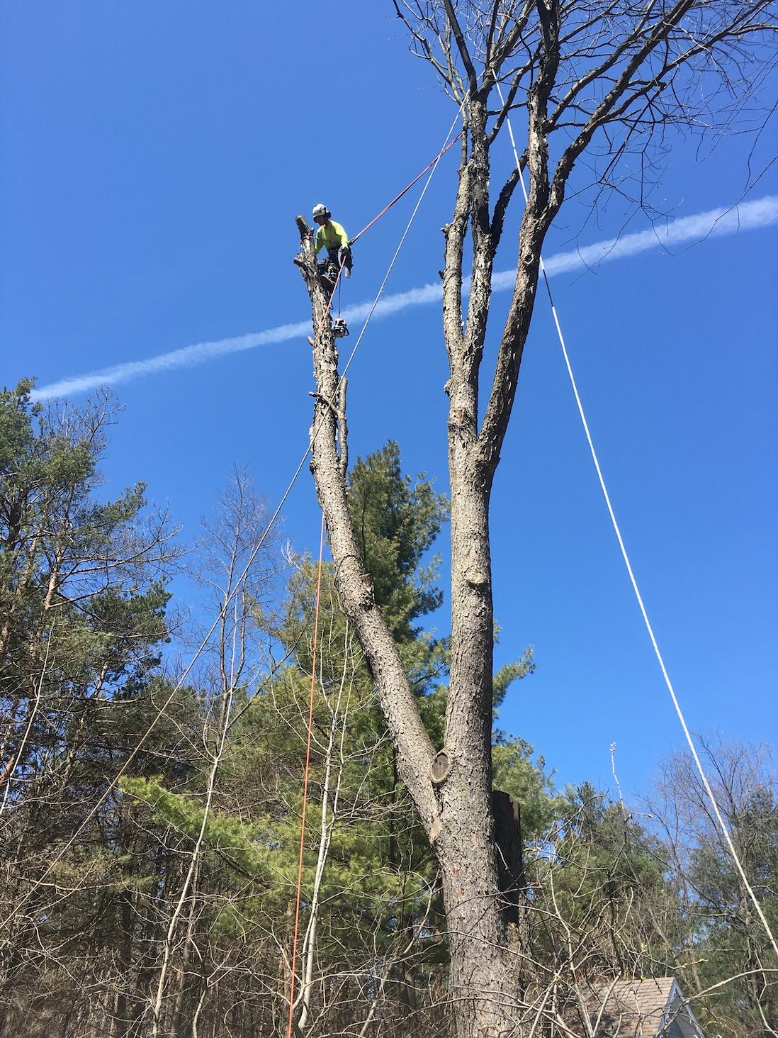 Tree Removal Midhurst