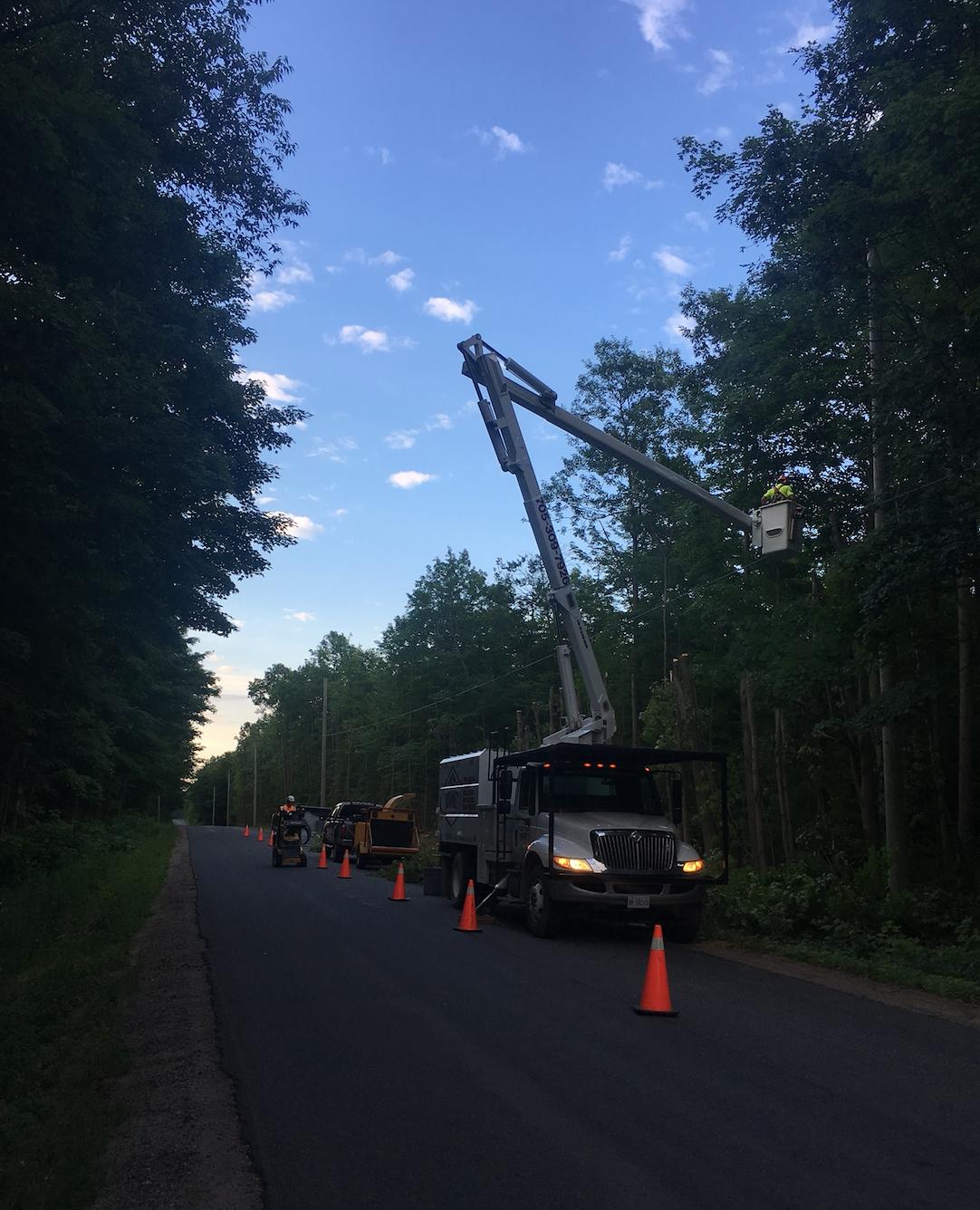 Tree Removal Anten Mills
