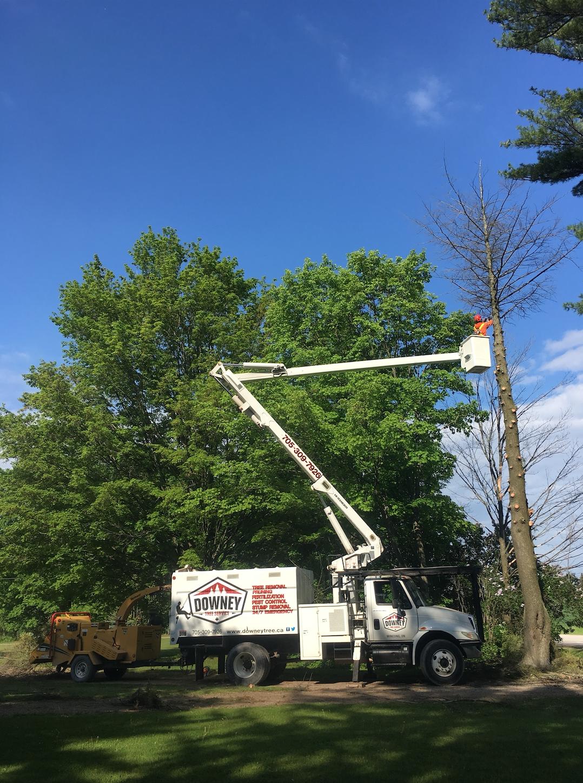 Tree Removal Oro-Medonte