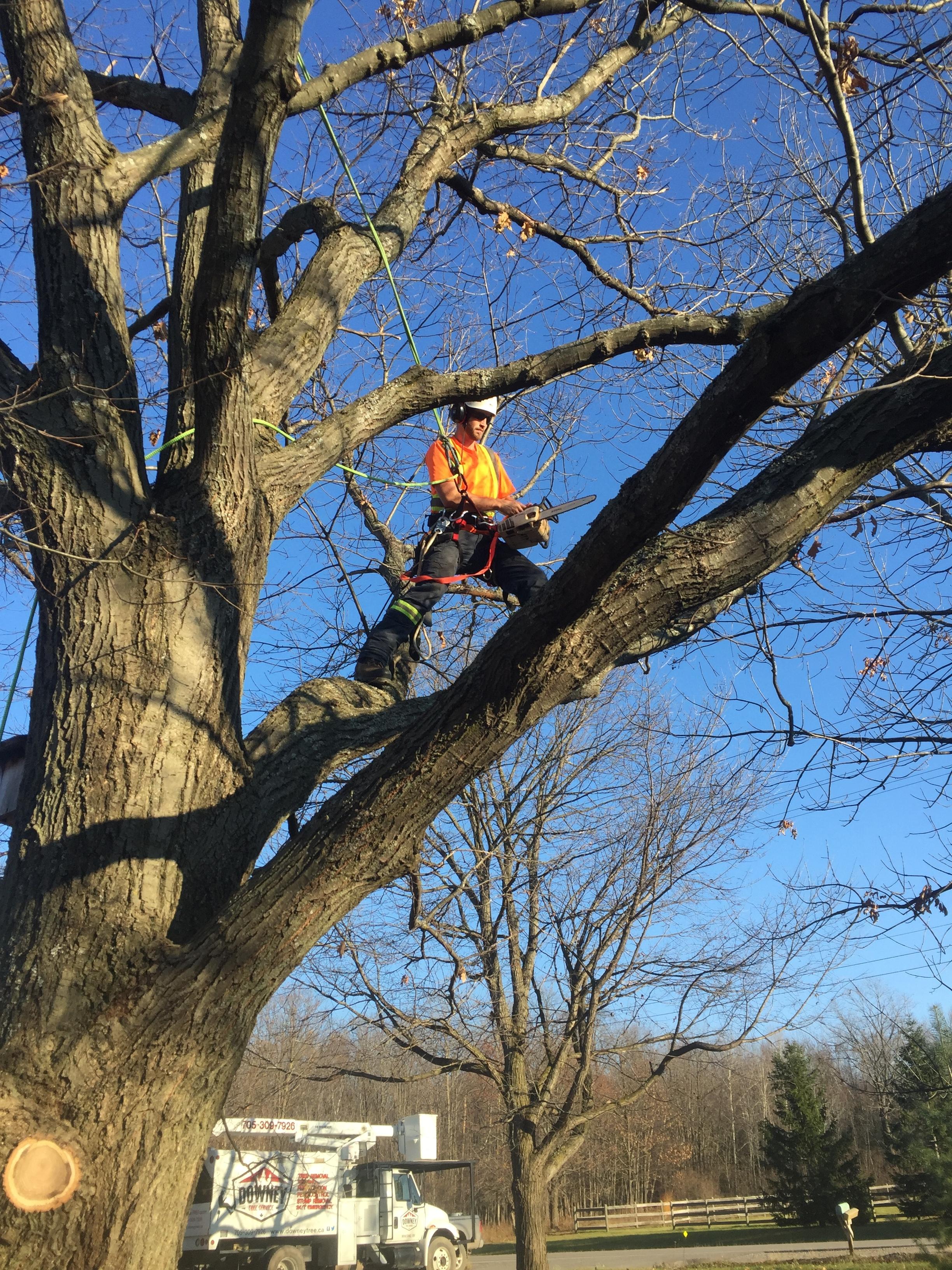 Tree Pruning Snowvalley