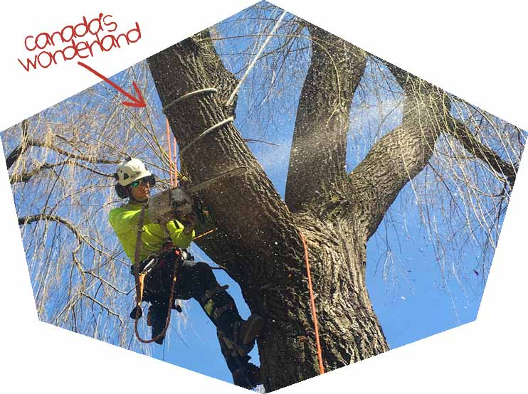 Tree-removal-Barrie-Ontario