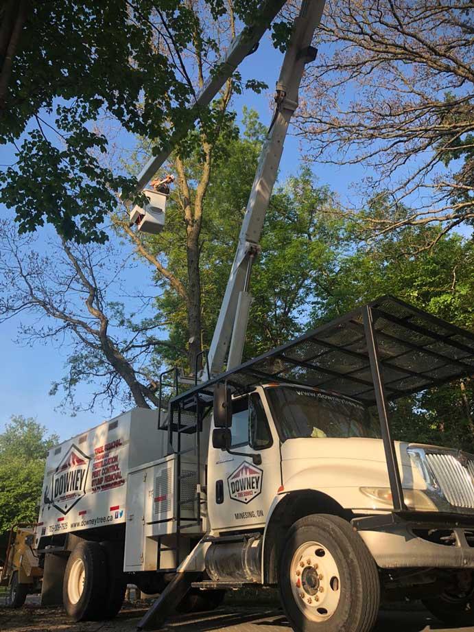 Oak-Tree-Removal-Wonderland
