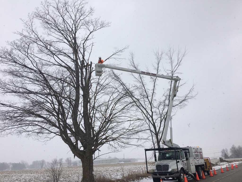 Tree-Pruning-Springwater-Township