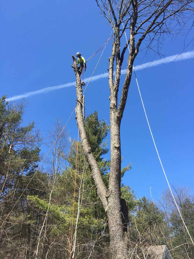 Tree-Removal-Midhurst