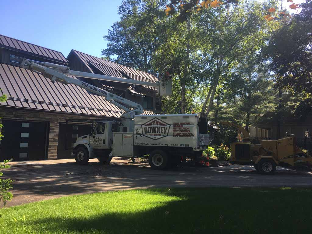 Tree-Services-Barrie
