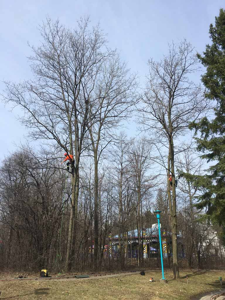 Two-Arborists-Pruning