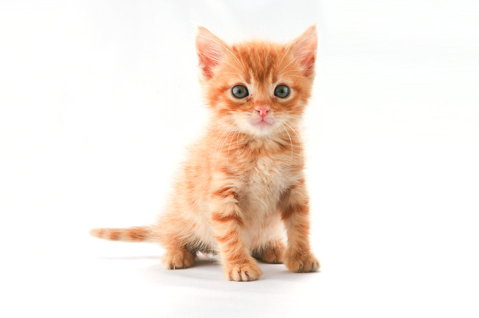 """I've written, so kitten. """" Retouched Kitty """" by  Ozan Kilic is licensed under  Creative Commons Attribution 2.0 ."""