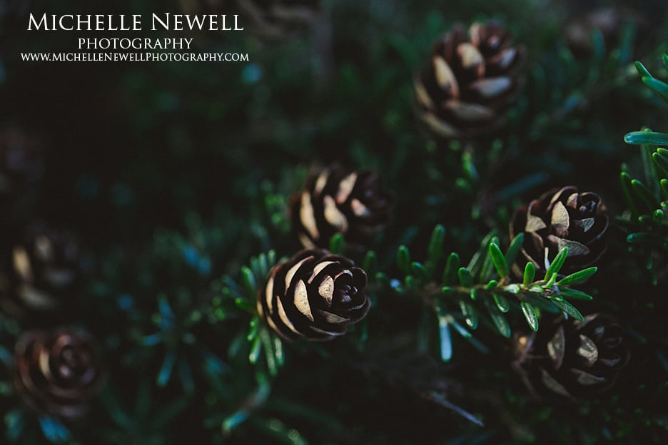 Michelle Newell Photography || Winter Foliage