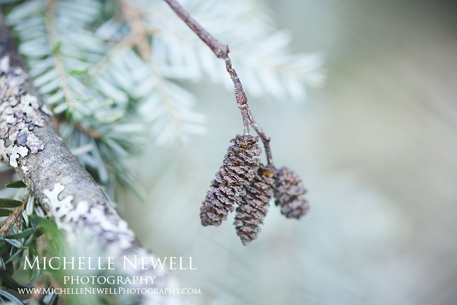 Michelle Newell Photography || Winter Beauty