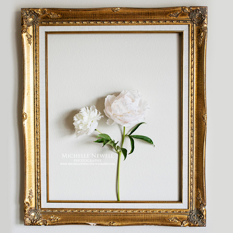 Portrait of a Peony by Michelle Newell Photography
