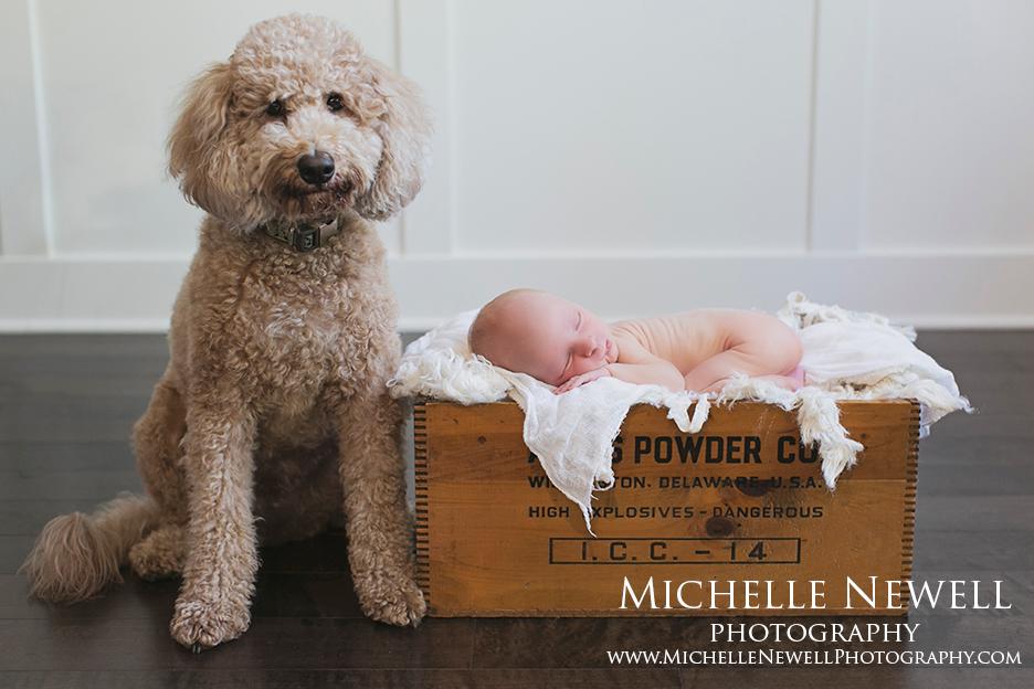 Seattle Newborn Photographer by Michelle Newell