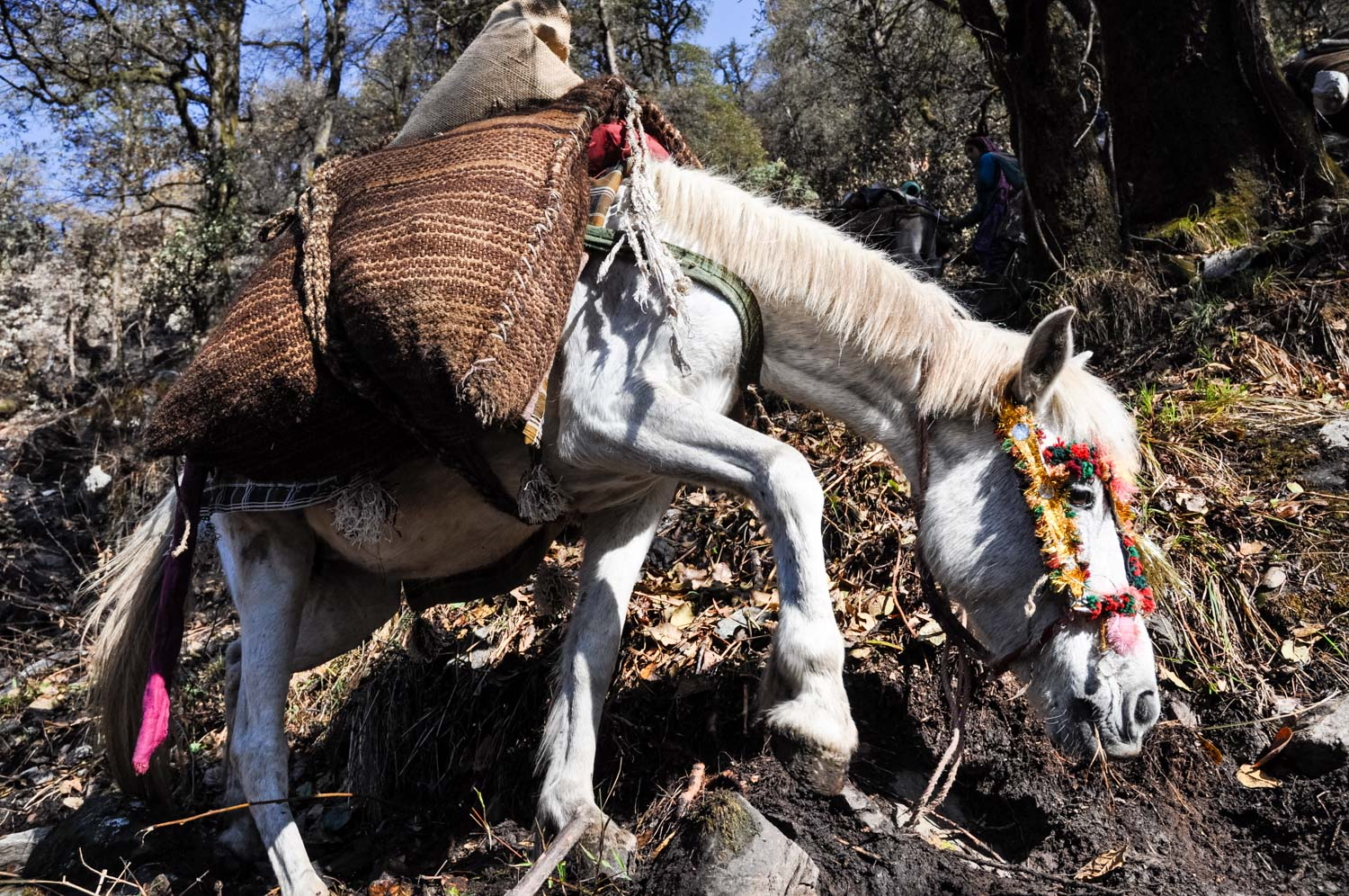 A pack horse makes its way up what only loosely meets the definition of a trail
