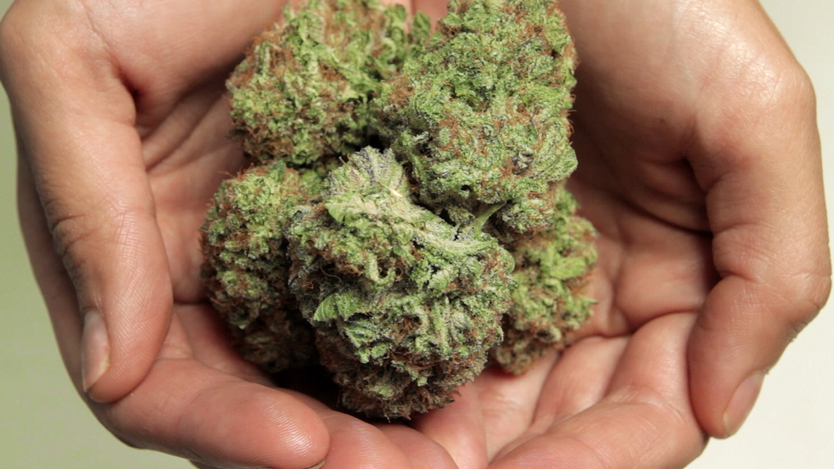 TJs-Organic-Gardens-Cannabis.jpg