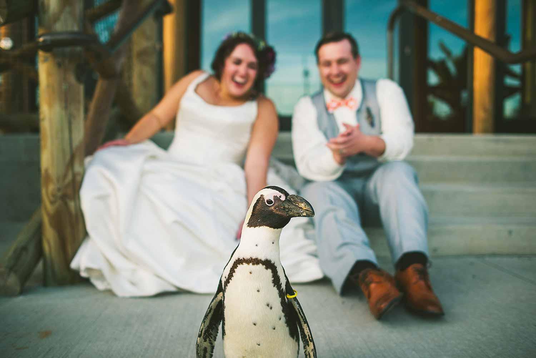 columbus-zoo-funny-wedding-portrait-penguin.jpg