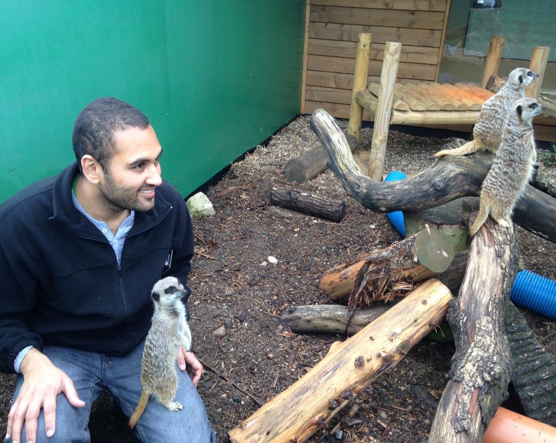 Meerkat training.JPG