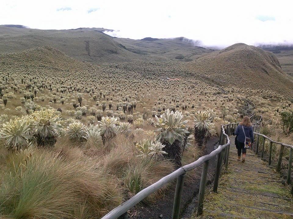 Ecuador Sydney Weekend Trip Landscape.jpg