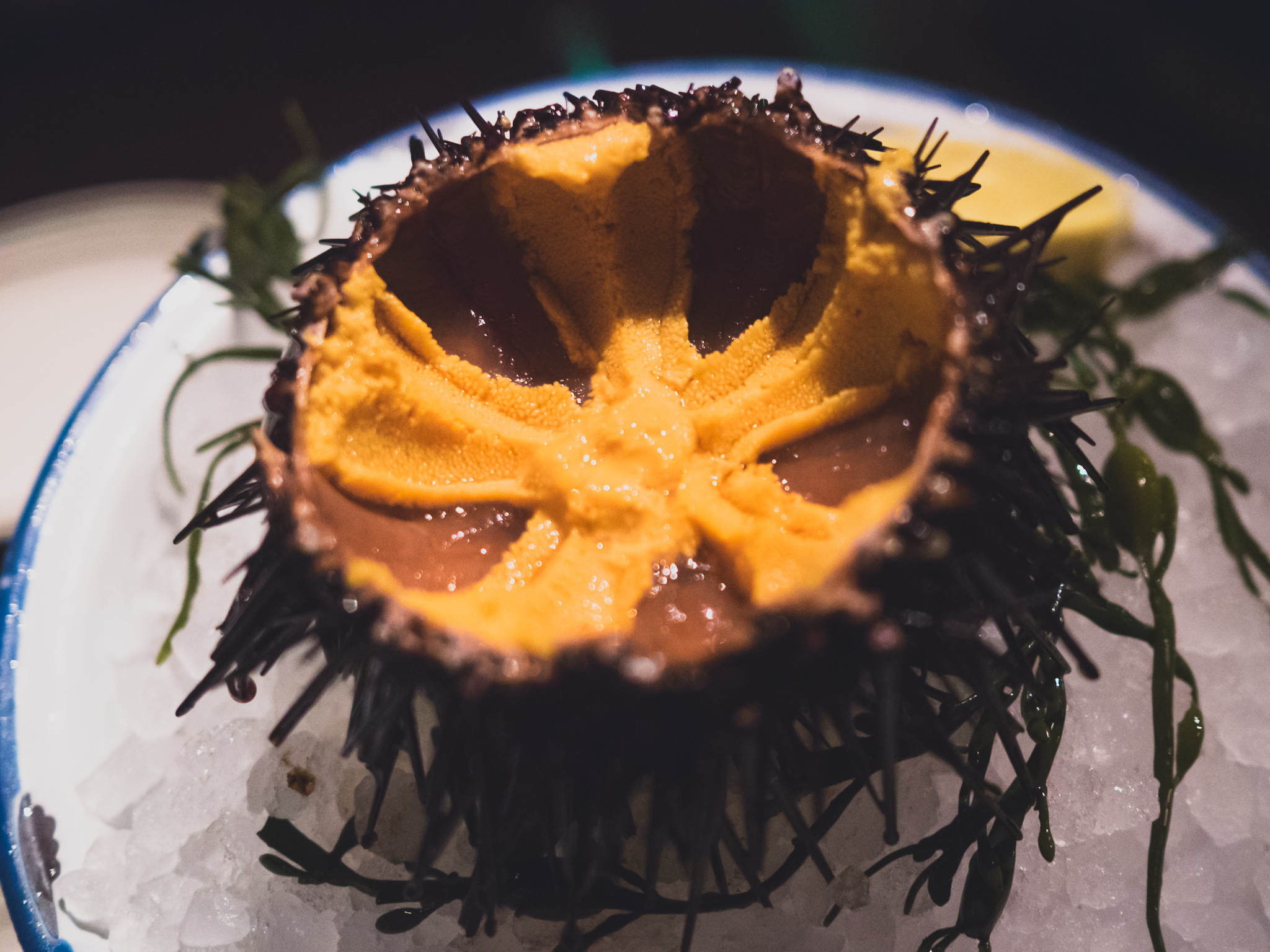 live santa barbara sea urchin. (swoon!)