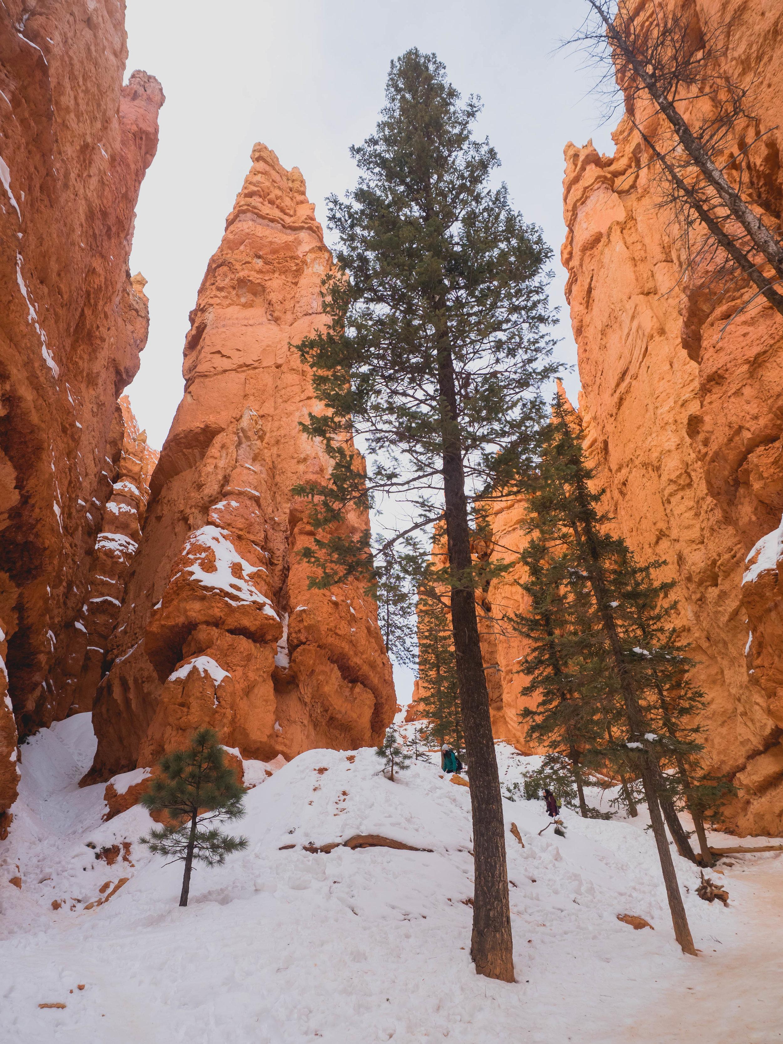 hiking navajo loop trail.