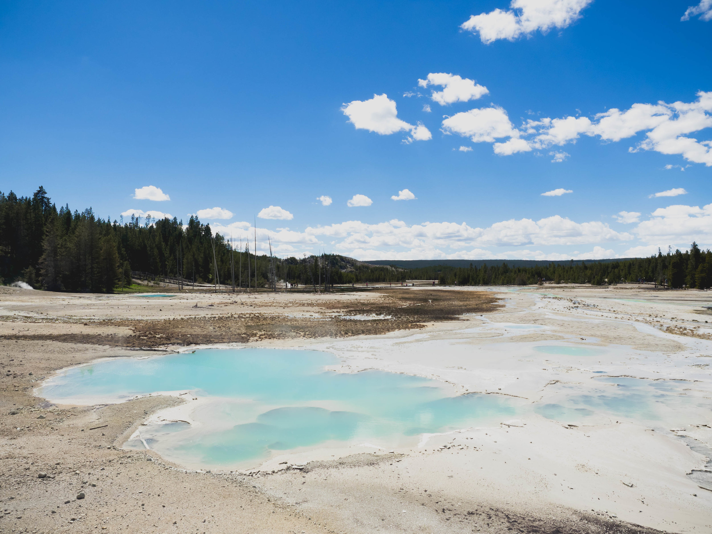 yellowstone's geothermal features.