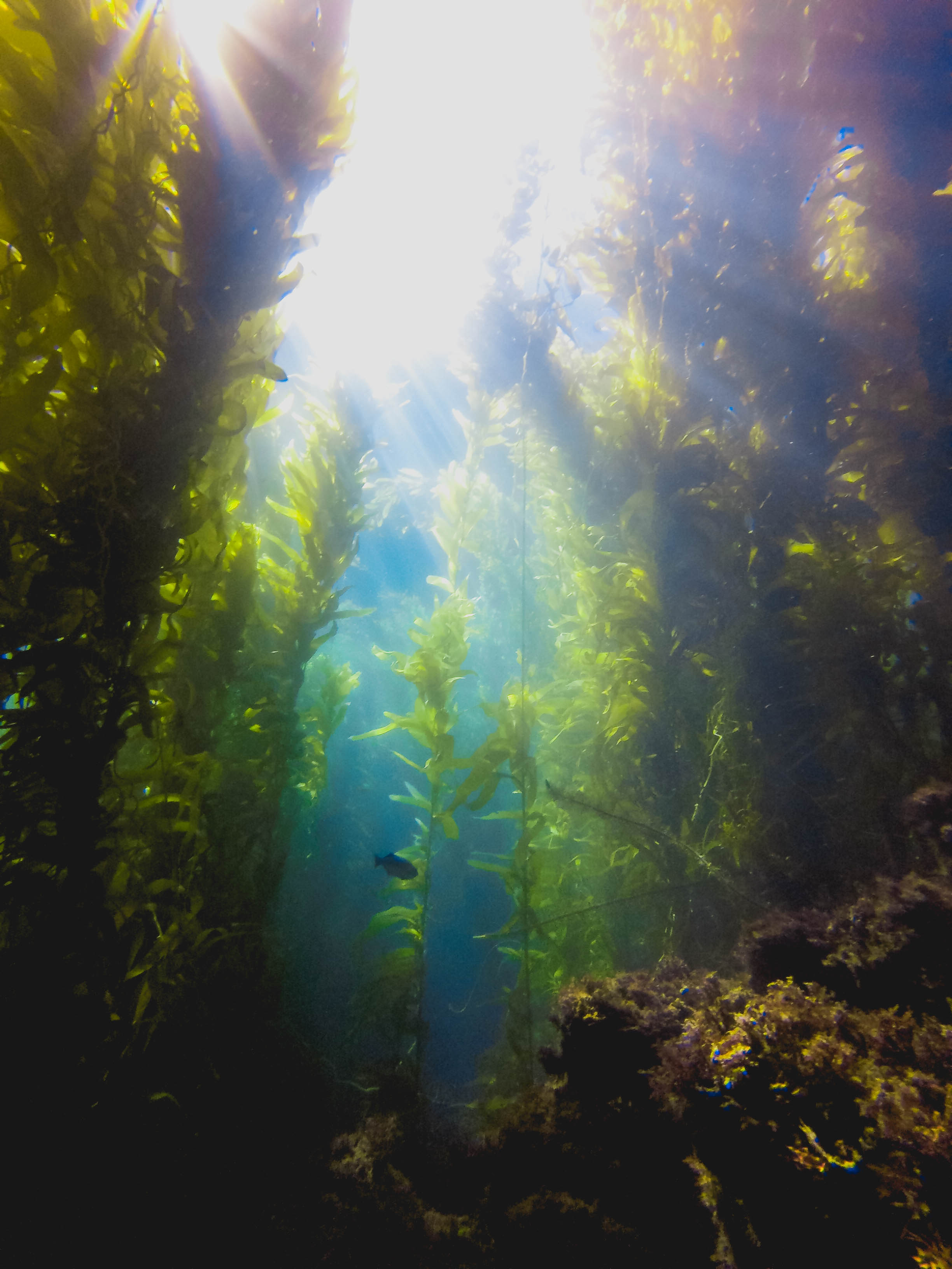 channels-islands-diving-125.jpg