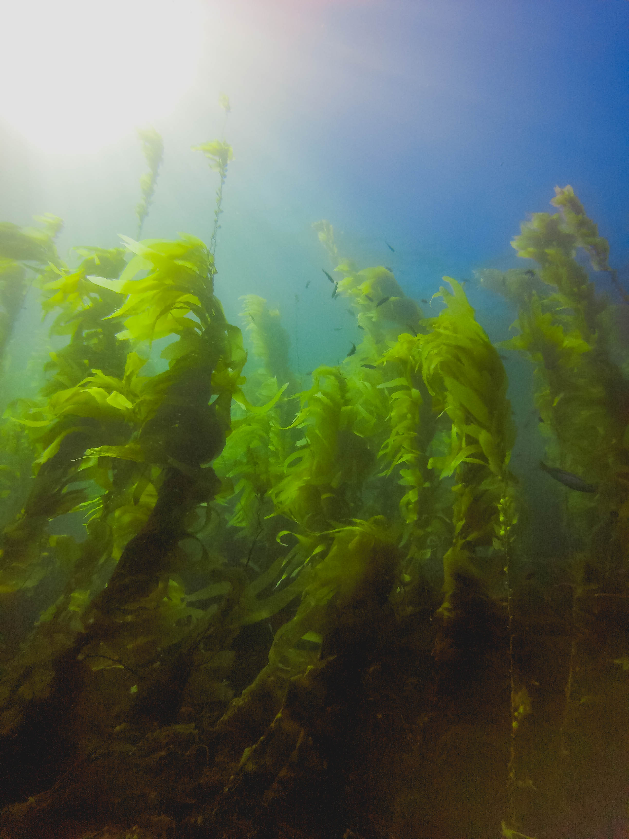 channels-islands-diving-124.jpg