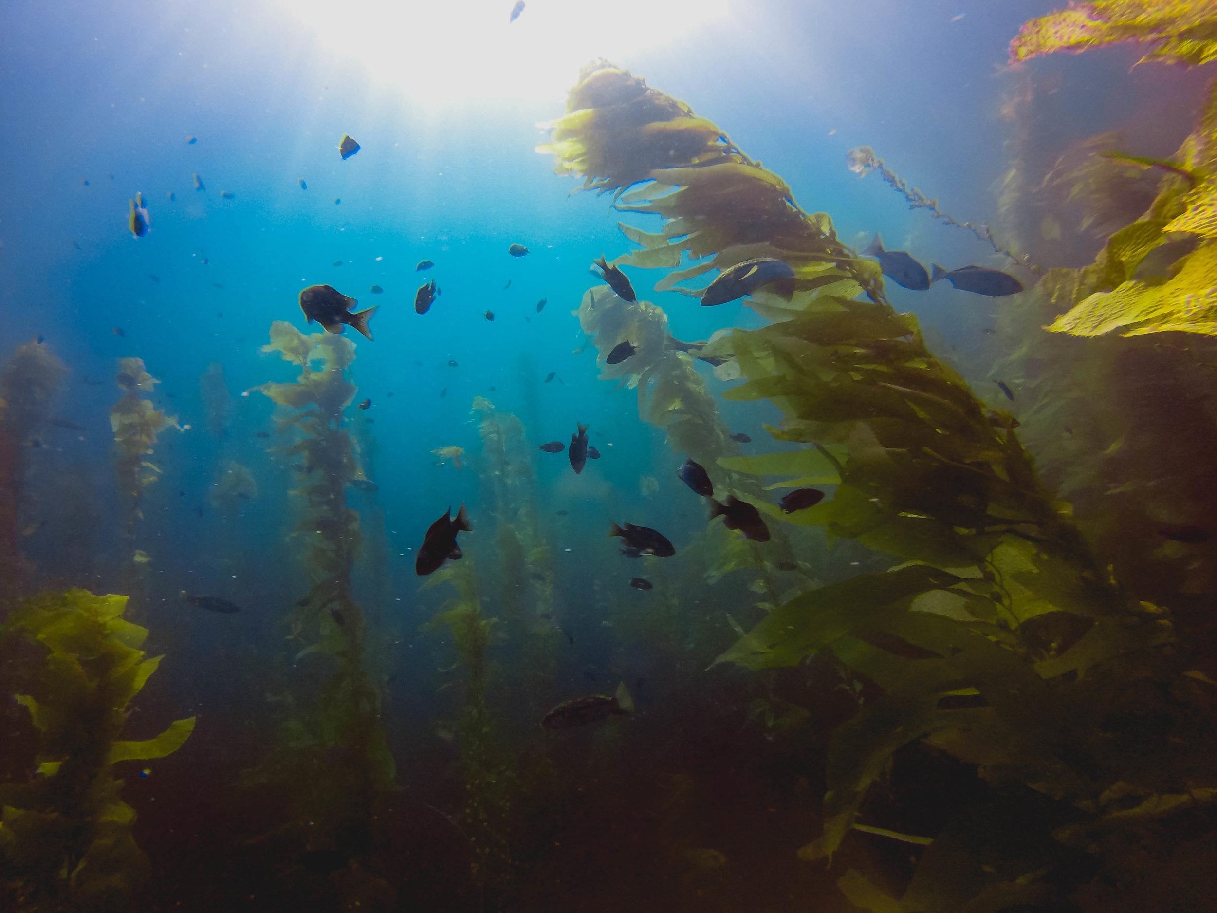 channels-islands-diving-108.jpg