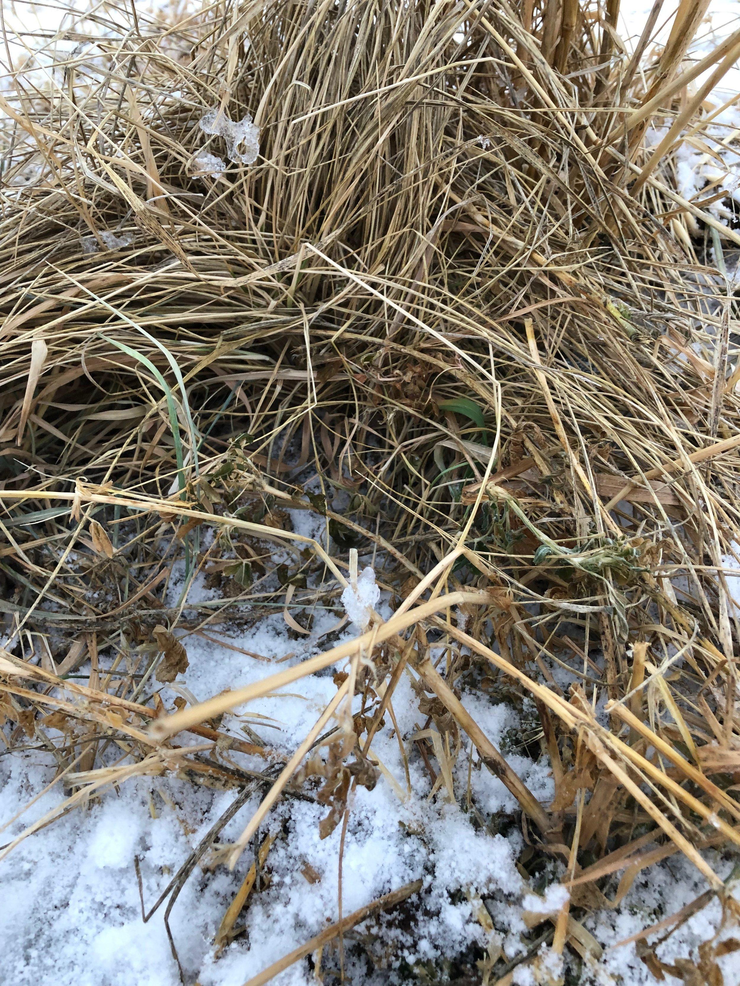 green grass - Dec.JPG