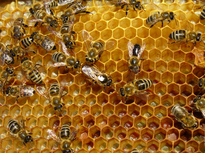 A honey bee hive.