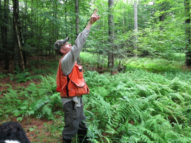 Former Grafton County Forester Dave Falkenham visited the property in June, 2013, and was very encouraging about long-term timber potential and the great condition of the forest.