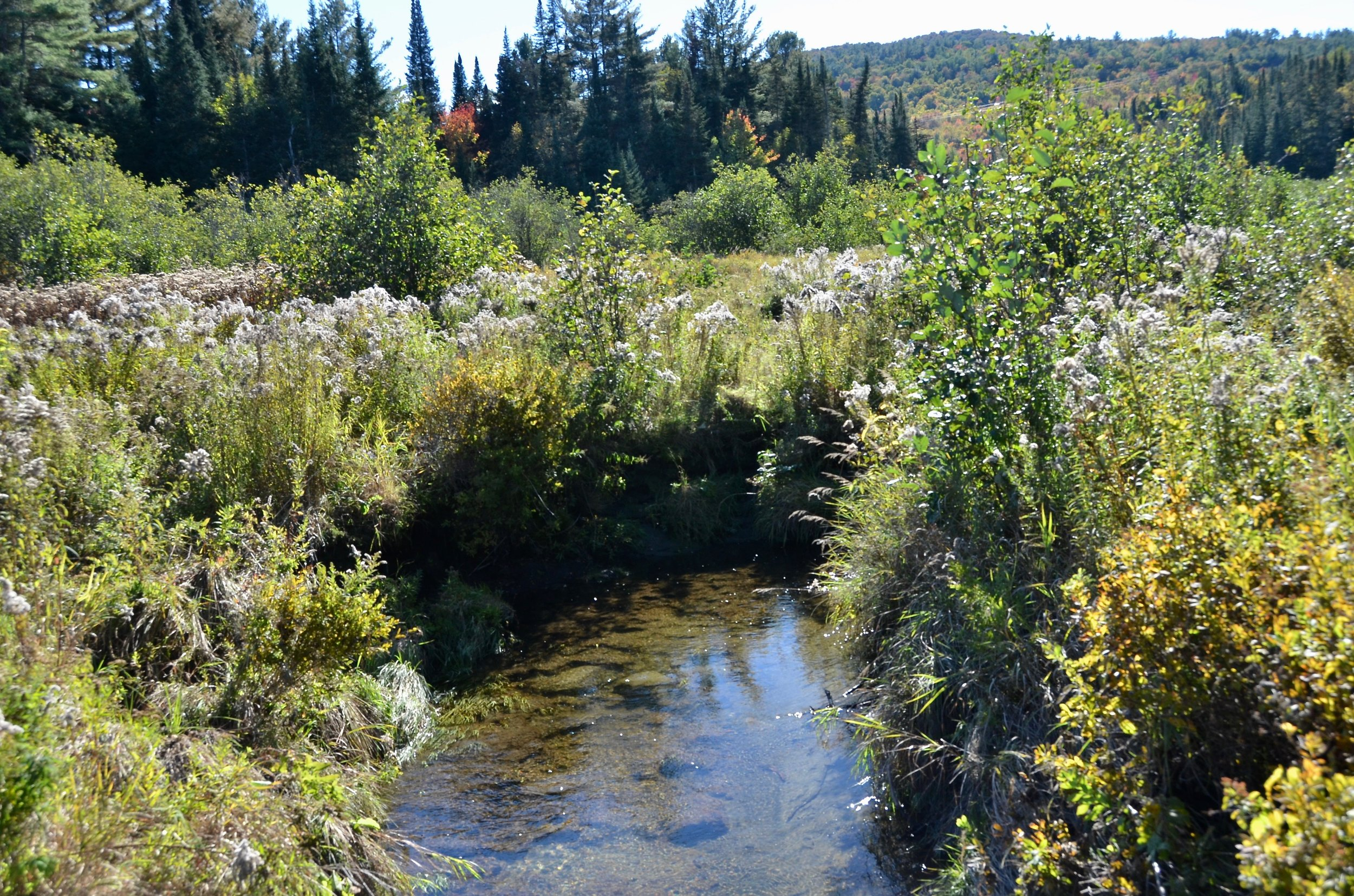 Salmon Hole Brook flows through the Creamery Pond conservation area. The brook originates several miles away within the Cooley-Jericho Community Forest, and flows though lands within the Bronson Hill Conservation Area, all conserved by ACT.