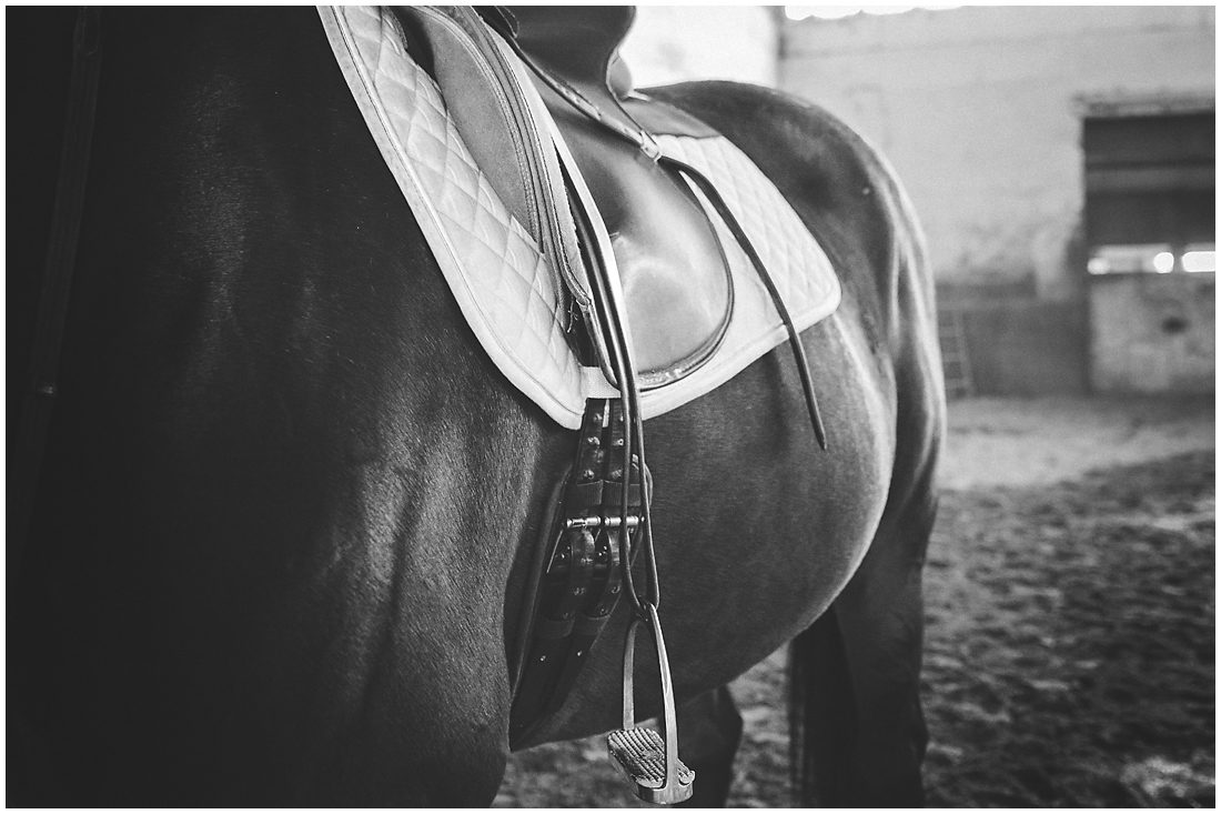 Fraser Valley Equine Photography