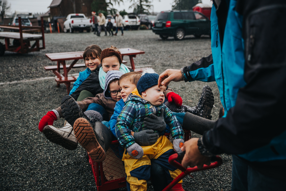 "The annual ""Fit all the Children in the Cart"" Photo takes on new meaning.  Christmas Tree Hunt Tradition at Oh Christmas Tree Farms in Langley, BC. Documentary Family Holiday Tradition, Real life moments with a family of 7 by Mimsical Photography. West Coast photographer in Lower Mainland, British Columbia."