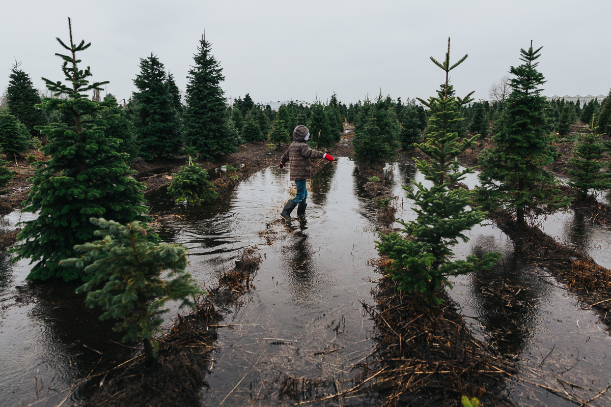 The true spirit of Christmas in wet British columbia is completing tradtions where others would stay home.  Christmas Tree Hunt Tradition at Oh Christmas Tree Farms in Langley, BC. Documentary Family Holiday Tradition, Real life moments with a family of 7 by Mimsical Photography. West Coast photographer in Lower Mainland, British Columbia