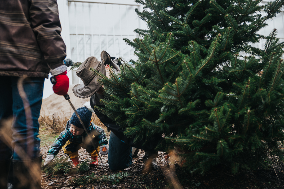 Dad's little helpers take their job seriously when cutting down the tree  Christmas Tree Hunt Tradition at Oh Christmas Tree Farms in Langley, BC. Documentary Family Holiday Tradition, Real life moments with a family of 7 by Mimsical Photography. West Coast photographer in Lower Mainland, British Columbia
