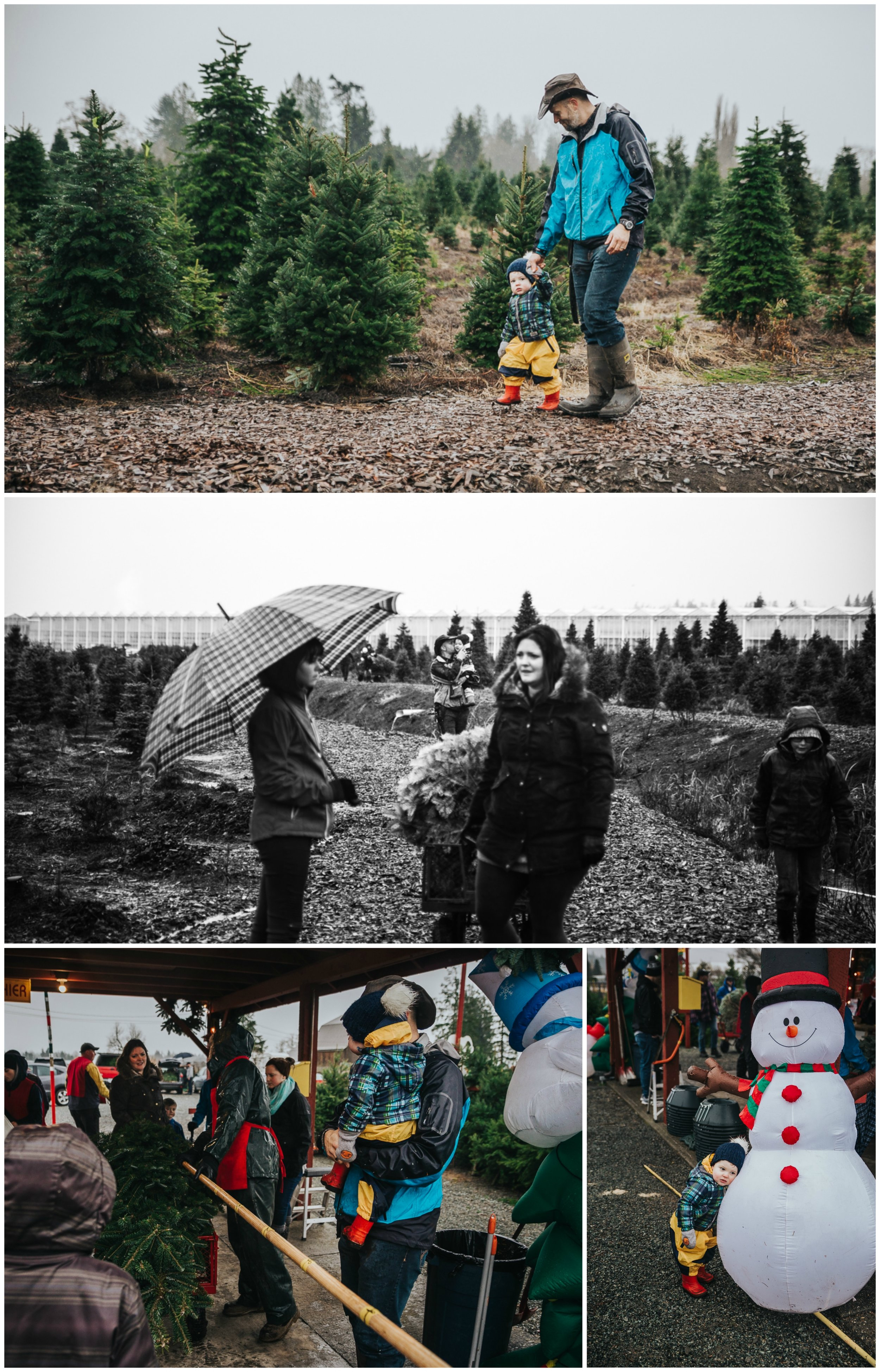 Christmas Tree Hunt Tradition at Oh Christmas Tree Farms in Langley, BC. Documentary Family Holiday Tradition, Real life moments with a family of 7 by Mimsical Photography. West Coast photographer in Lower Mainland, British Columbia