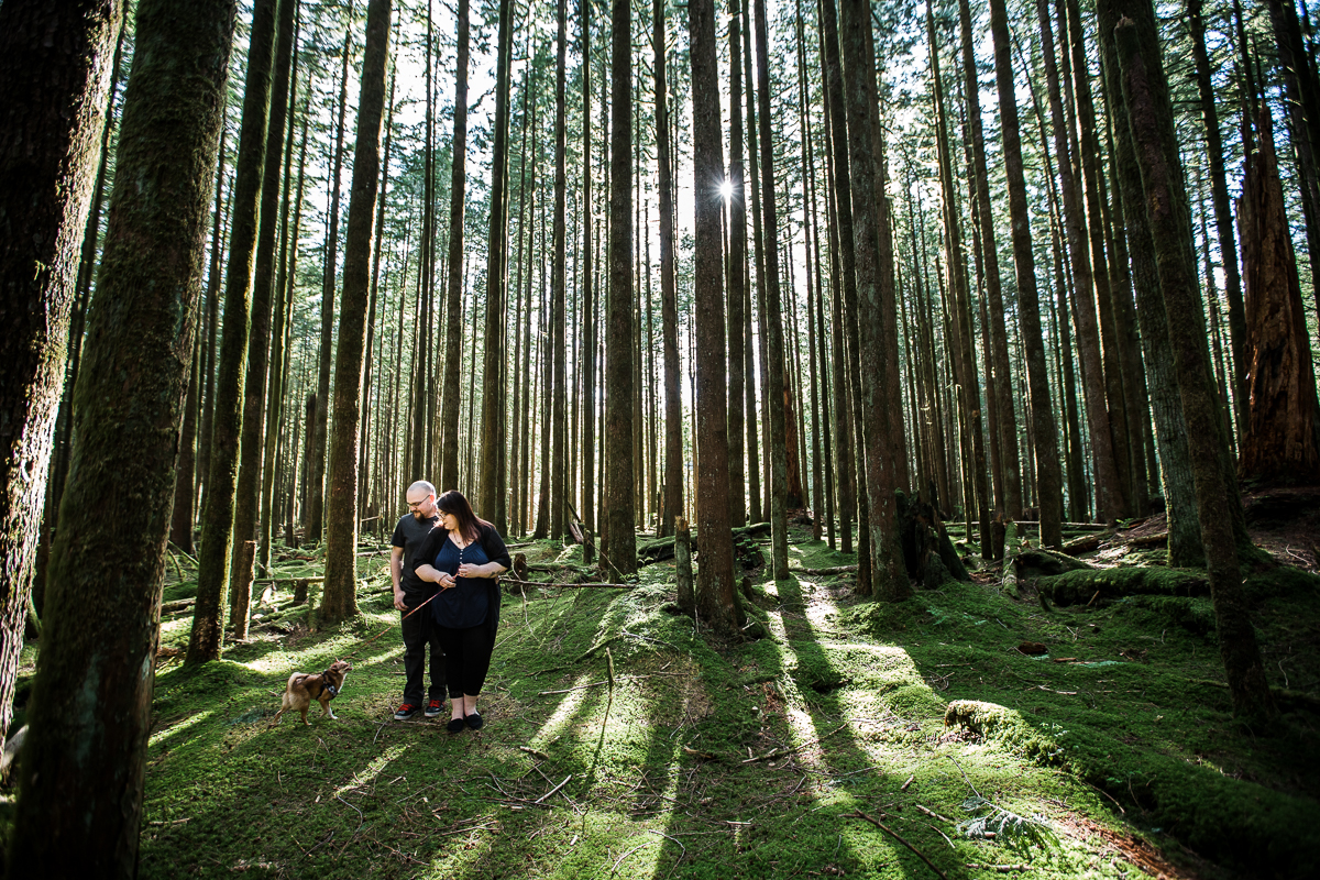 Couple walking chihuahua through moss covered forest floor between tall trees during spring engagement photography at  Spirea Nature Trail in Golden Ears Provincial Park in British Columbia by Mimsical Photography