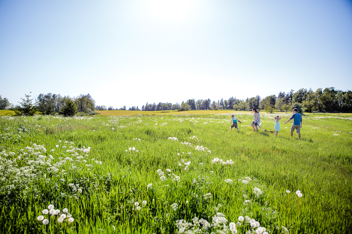 Family of 4 walking through a big wildflower field  during a Family Photography session at Aldergrove Bowl Provincial park in Abbotsford, British Columbia on a spring day  #vancouverfamilyphotographer #metrovancouver #candidfamilyphotos #lifestylefamily by mimsical photography christina voorhorst
