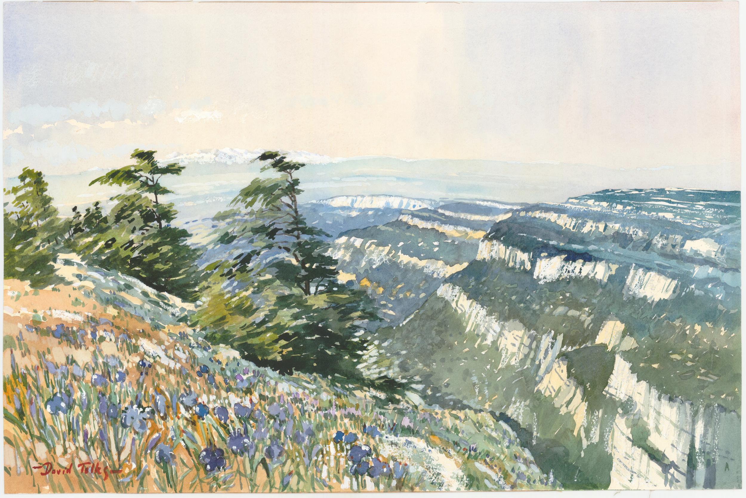 IRISES IN THE LUBERON:  14 x 20 in:  Watercolour