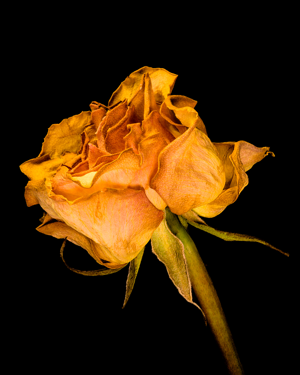 leavesandroses-23LR.jpg