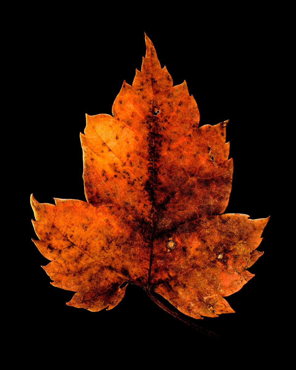 leavesandroses-20LR.jpg