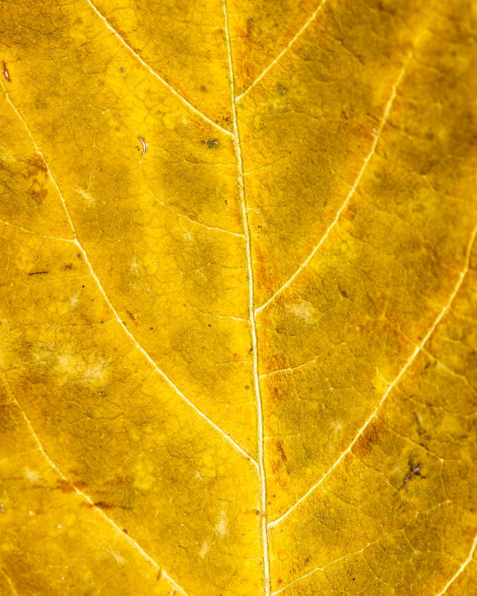 leavesandroses-4LR.jpg