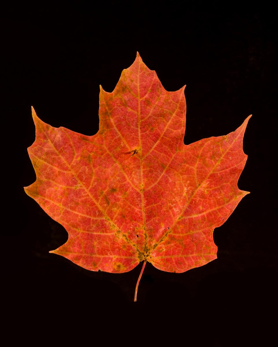 leavesandroses-12LR.jpg
