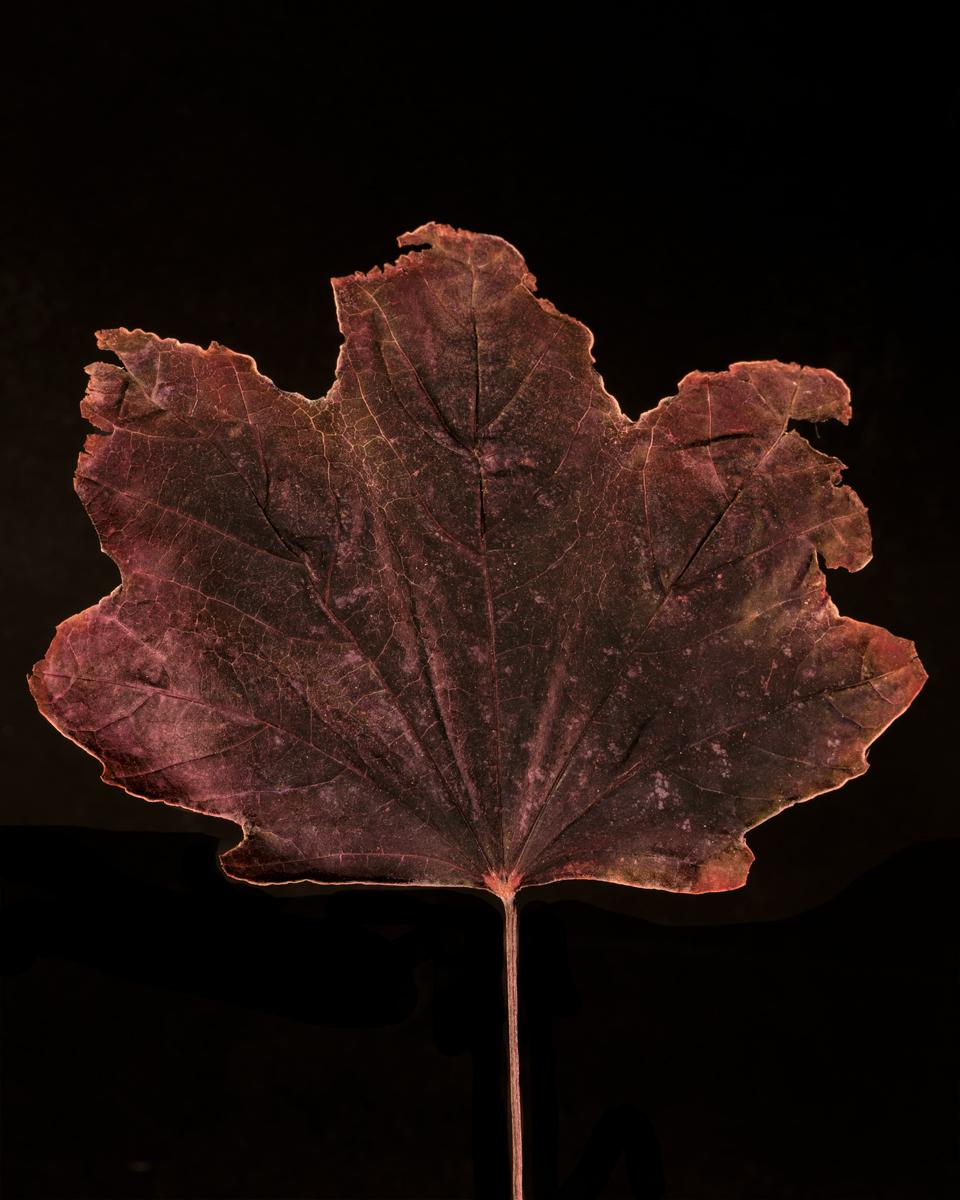 leavesandroses-11LR.jpg