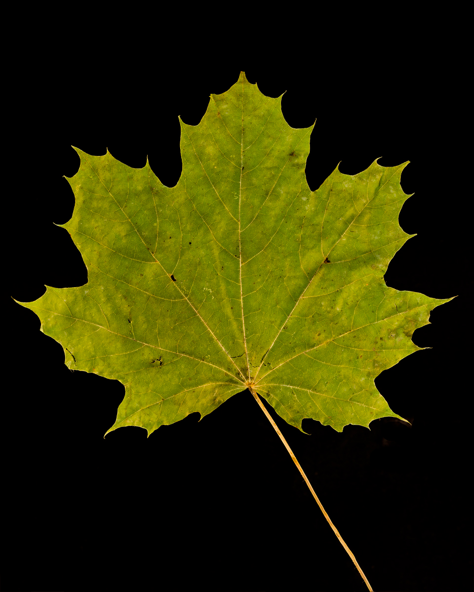 leavesandroses-13LR.jpg