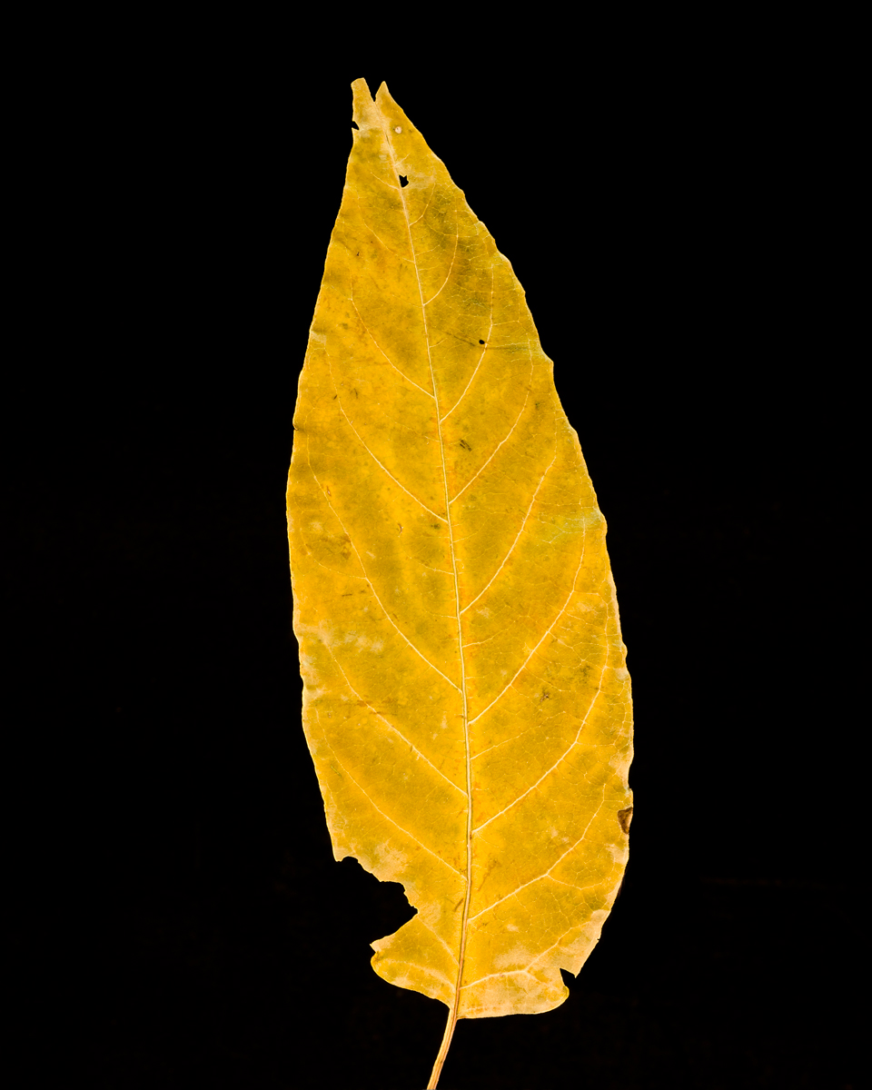 leavesandroses-14LR.jpg