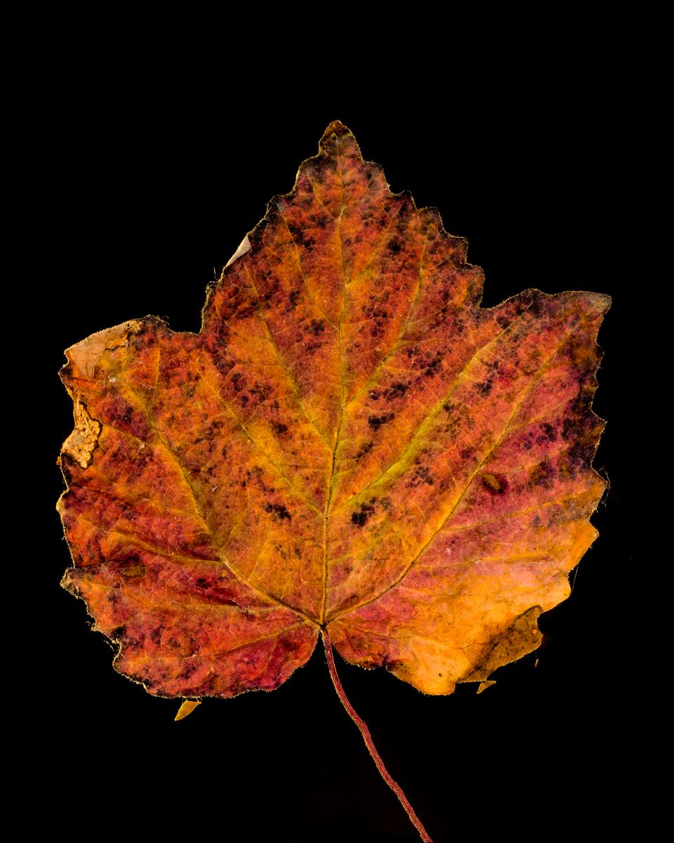leavesandroses-15LR.jpg
