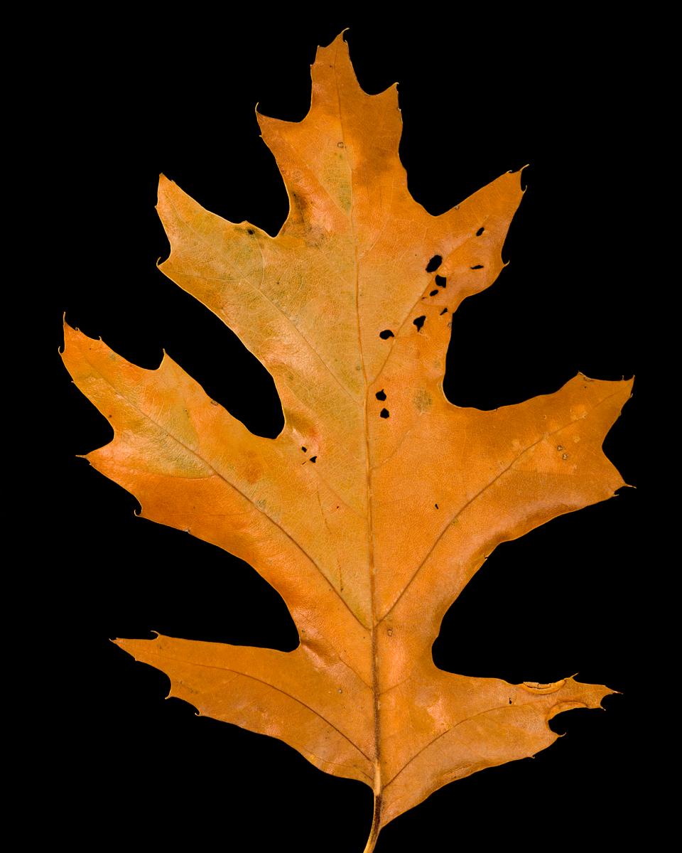 leavesandroses-16LR.jpg