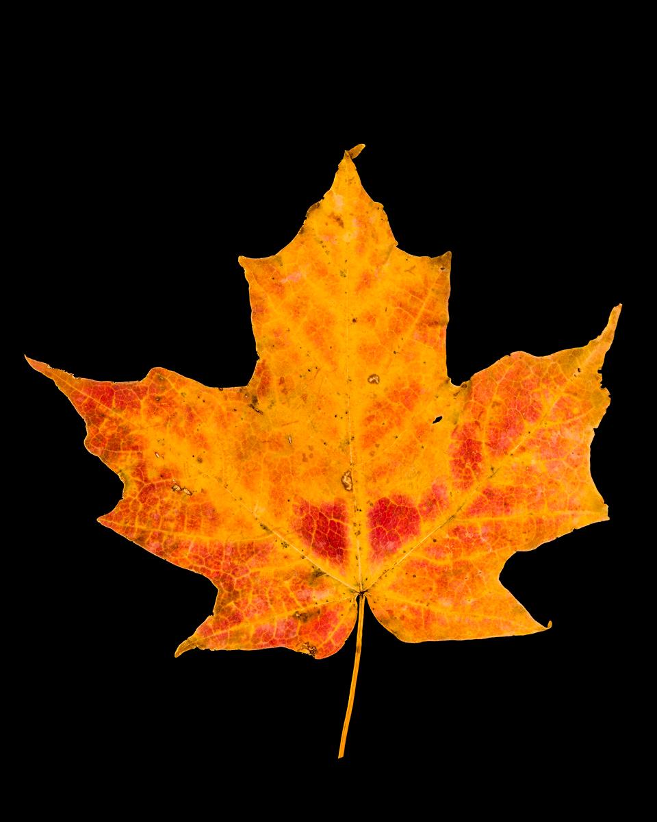 leavesandroses-18LR.jpg