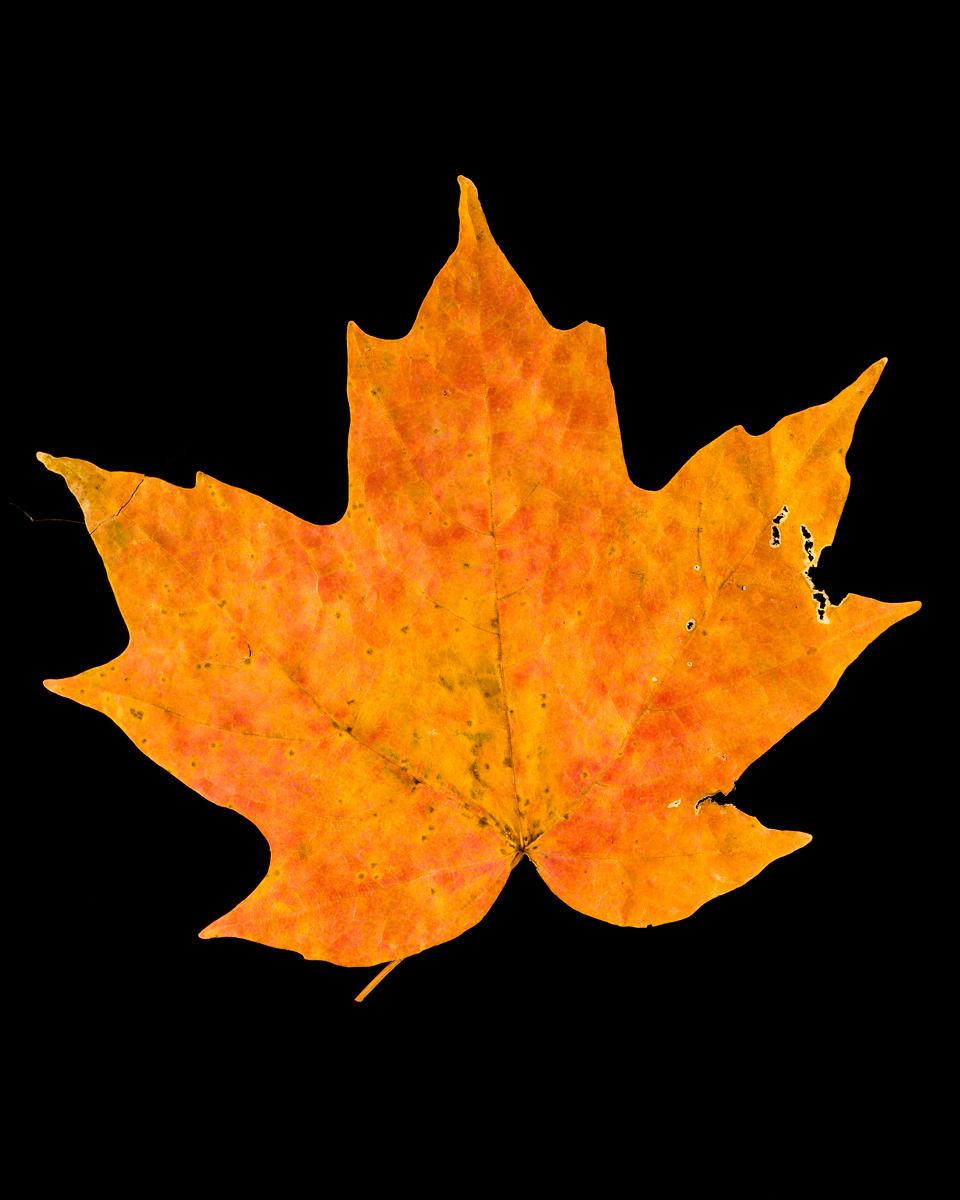 leavesandroses-19LR.jpg