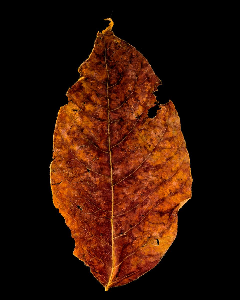 leavesandroses-21LR.jpg